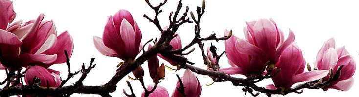 Floraal orientaalse geuren