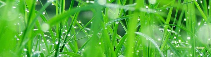 Groene geuren