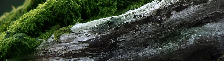 Mosachtige hout geuren