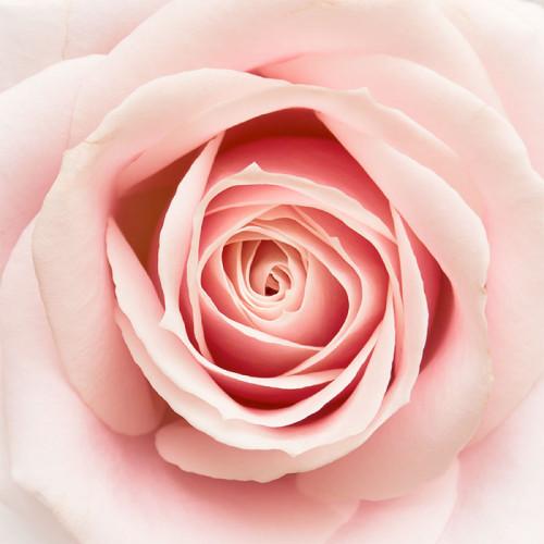 Acqua di Parma Rosa Nobile 20ml Eau De Parfum Spray