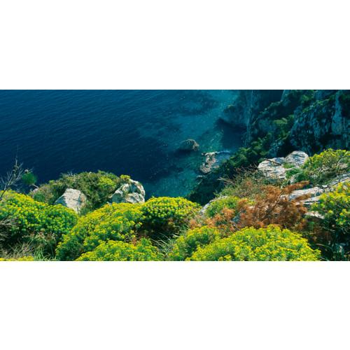 Acqua di Parma Blu Mediterraneo Bergamotto di Calabria 200ml Showergel
