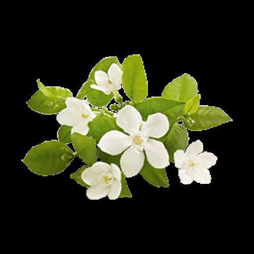 Decléor Hydra Floral Eau de soin hydratante anti pollution 100ml