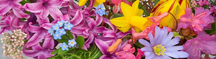 Florale geuren bij Parfumcenter.nl