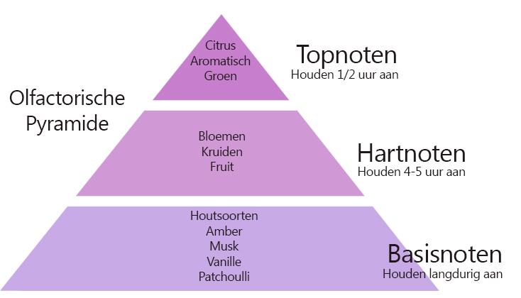 olfactorische pyramide parfum top hart basis