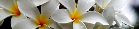 Zacht Florale geuren